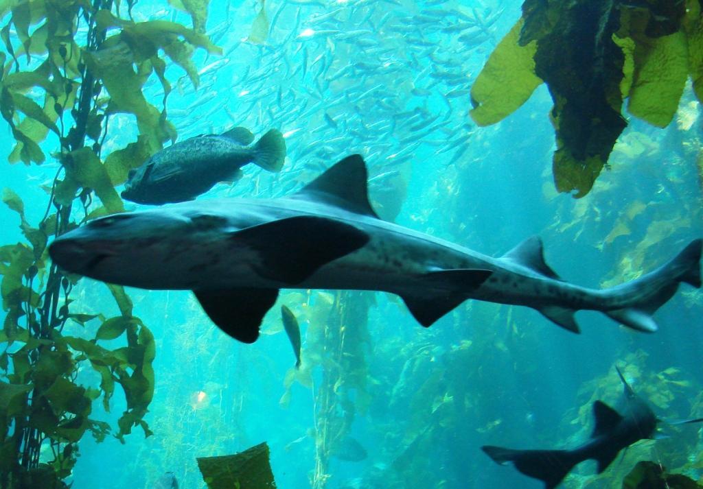 Food Places Near Monterey Bay Aquarium